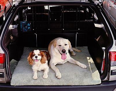 Remove Wet dog smell in car use Adsorbex Multi Sachets to prevent unpleasant build up